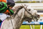 Gris Caro into Caulfield Cup with Naturalism Stakes win