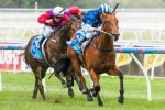 Nordic Empire Can Win Mitchelton Wines Handicap