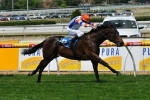 Jimando To Miss Spring Racing Carnival