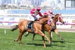 Al Quoz Sprint an Option for The Quarterback