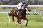 Showpero to chase hat trick in Lightning Stakes