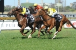 Eurozone To Receive Lovely Run In 2014 Randwick Guineas