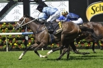Waller 3 dominate 2016 Sydney Cup field