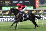 Up And Coming Stakes First-up for Prized Icon