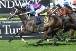 Waller to saddle up 3 runners in Winter Challenge
