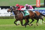 Better track the key to Rock Sturdy in Bill Ritchie Handicap