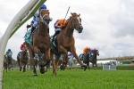 Te Akau Shark settled in well for Chipping Norton Stakes