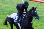 Staying Concerns For Dandino In Melbourne Cup 2013