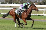 I Am A Star to shine during 2017 Melbourne Spring Carnival