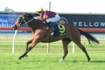 Lees Happy With Dark Jewel Classic Duo